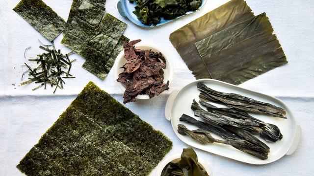 Algas de sushi